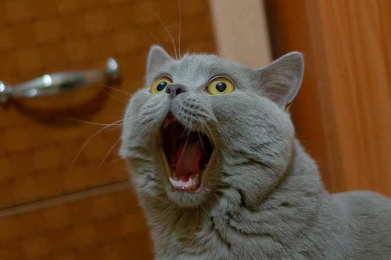 Почему кошки сходят с ума по ночам?