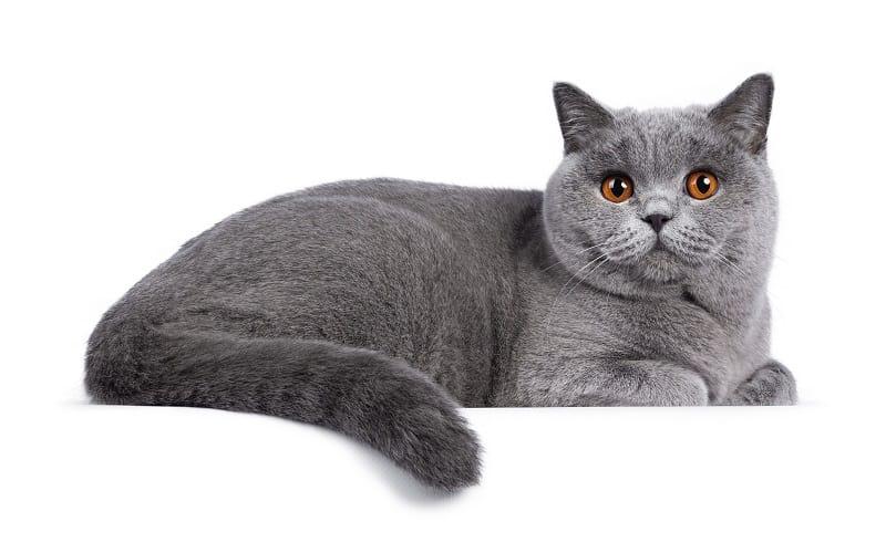 Почему кошки скрещивают лапы?