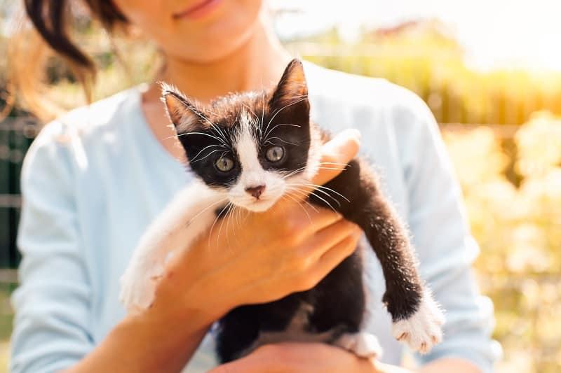 Почему кошки слабеют, когда вы их берете на руки