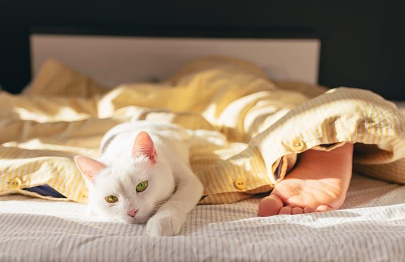 Почему кошки спят у изножья кровати
