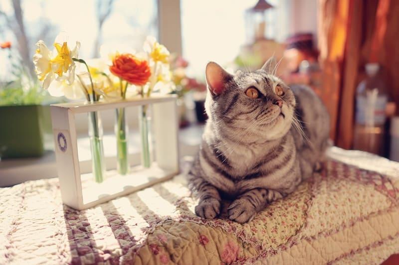 Почему кошки толкают вещи