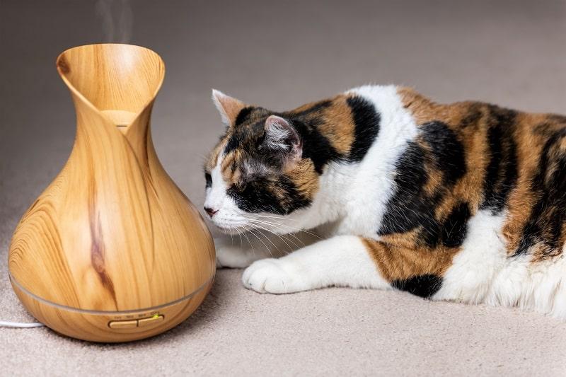 Почему кошки трутся о вещи мордочкой