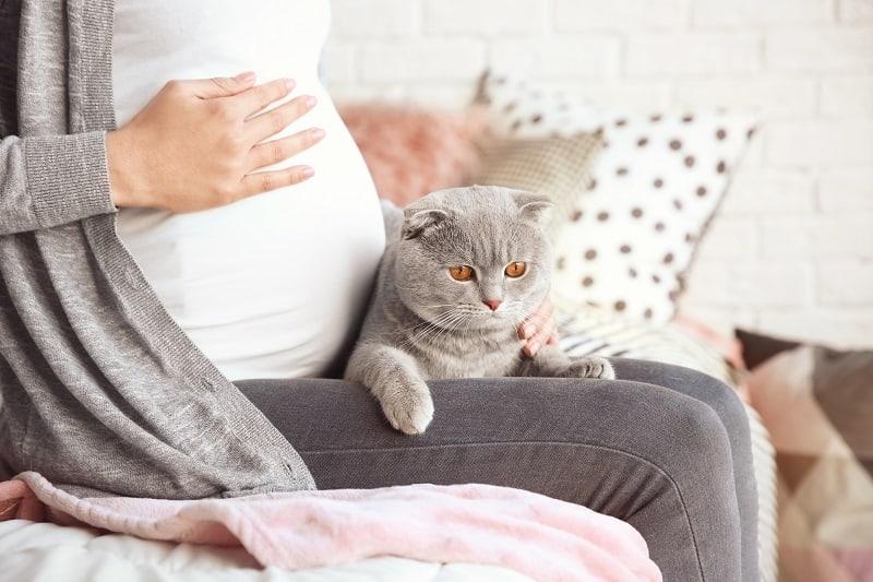 Почему моя кошка лежит у меня на животе, когда я беременна