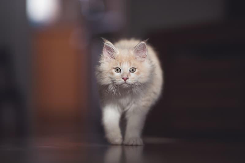 Почему моя кошка мяукает перед тем, как пойти в ванную