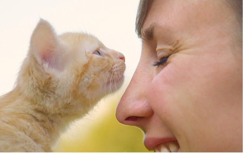 Почему моя кошка нюхает мое лицо?