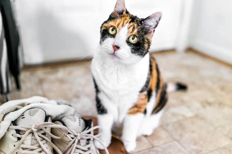 Почему моя кошка приносит мне носки?