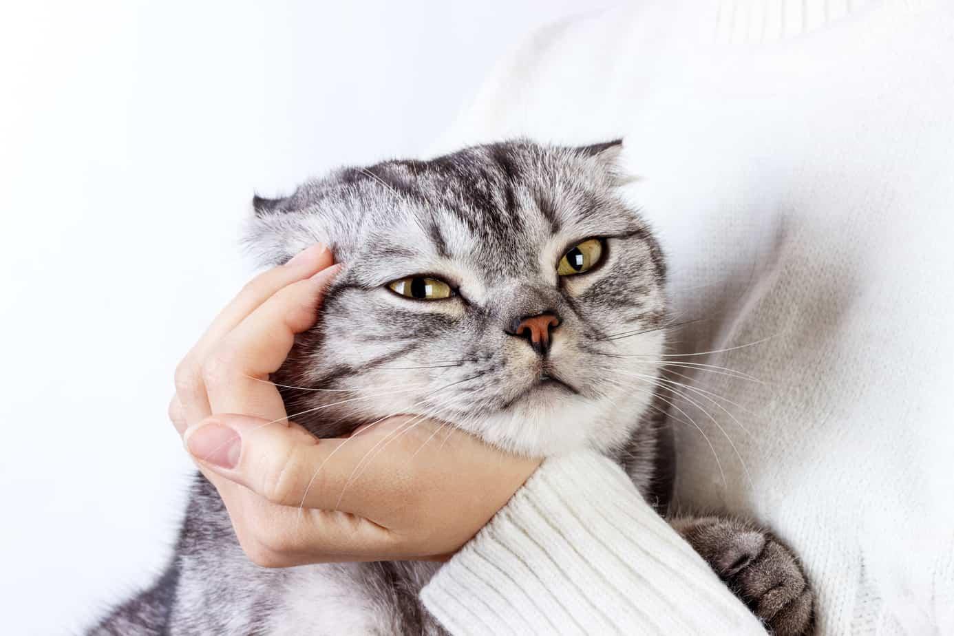 Почему моя кошка громко мурлычет