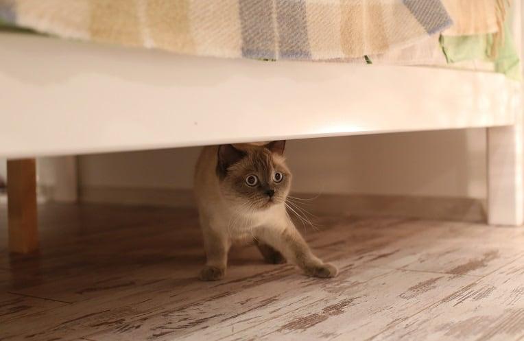 Почему моя кошка внезапно испугалась