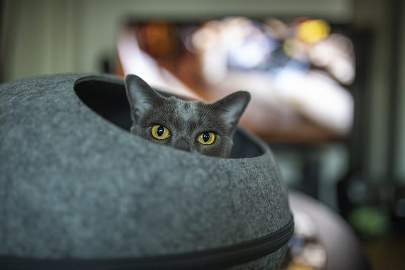 Почему мой кот внезапно меня игнорирует