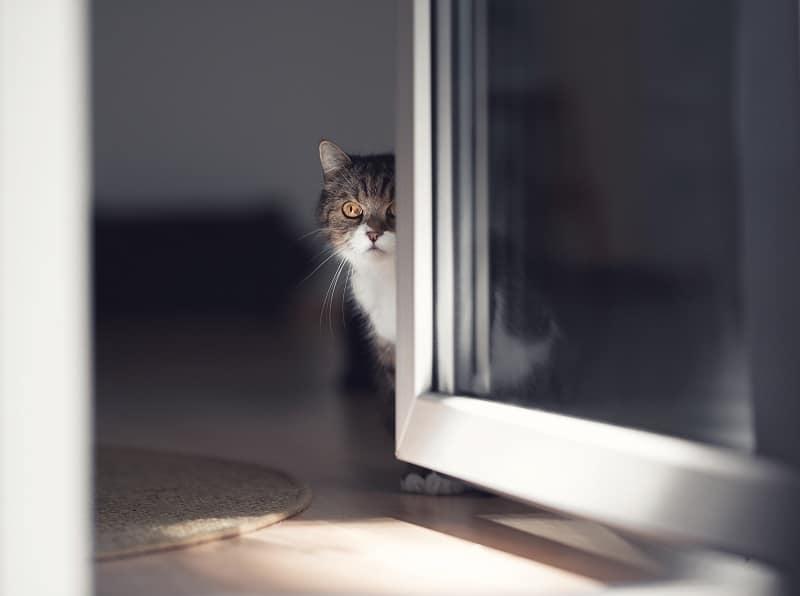 Почему моя кошка внезапно меня избегает?