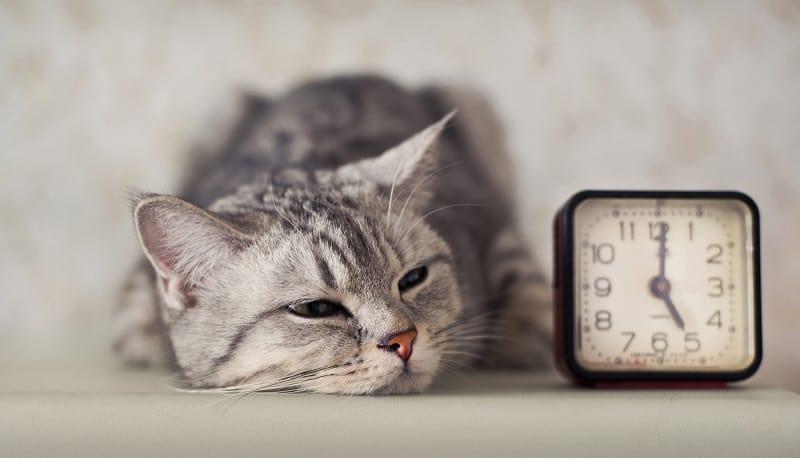 Подходит ли Feliway для кошек, находящихся в стрессе