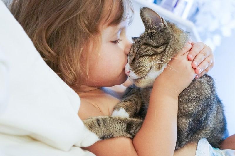 Понимают ли кошки поцелуи