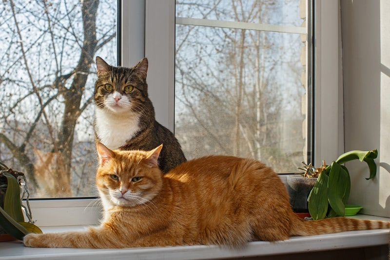 Повторное знакомство с кошками после их разлучения