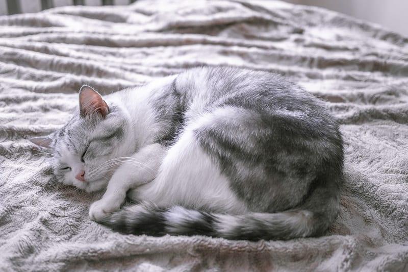 Поза кошки во сне, когда она больна