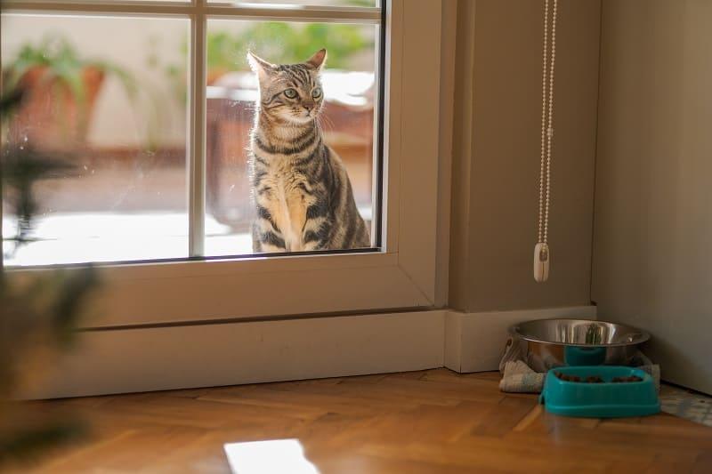 Вернется ли мой кот, если я позволю ему выйти на улицу