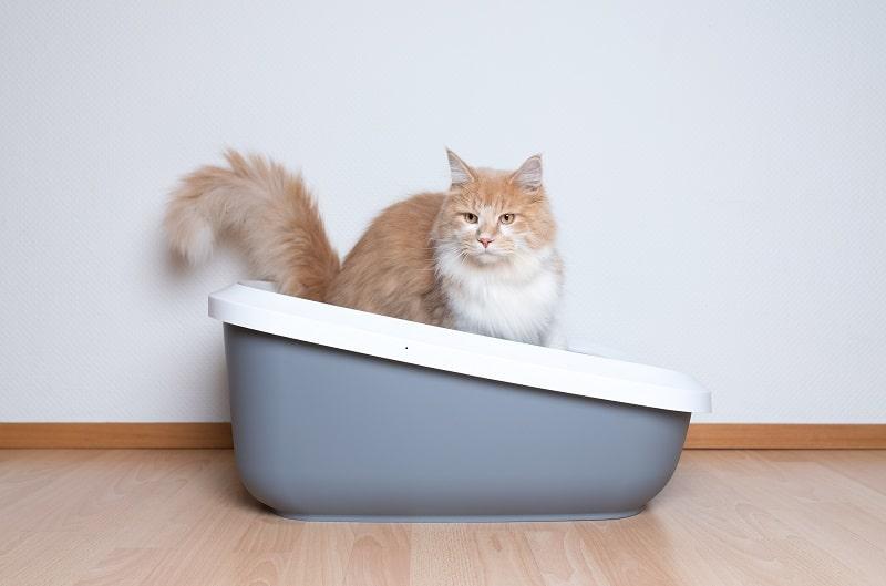Весь дом пахнет кошачьей мочой
