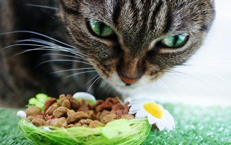 Влажный и сухой корм для кошек