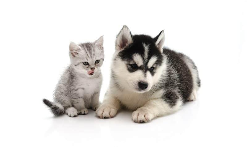 Вместе воспитывать щенка и котенка