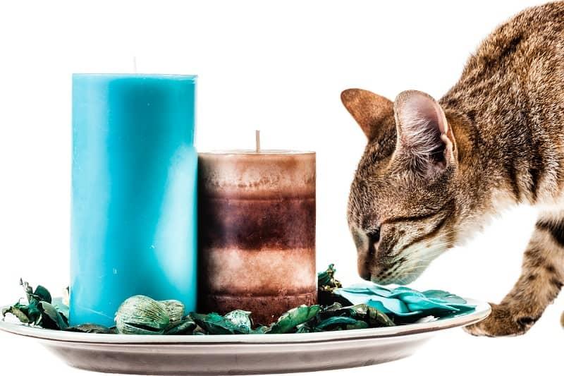 Вредны ли благовония для кошек