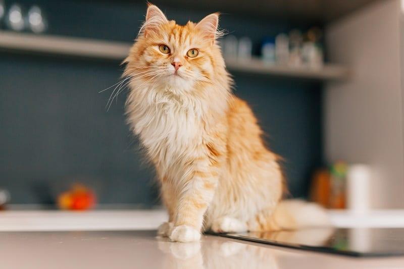 Все коты оранжевого полосатого кота