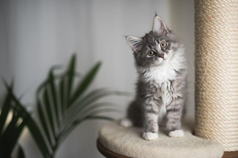 Зачем кошкам когтеточки