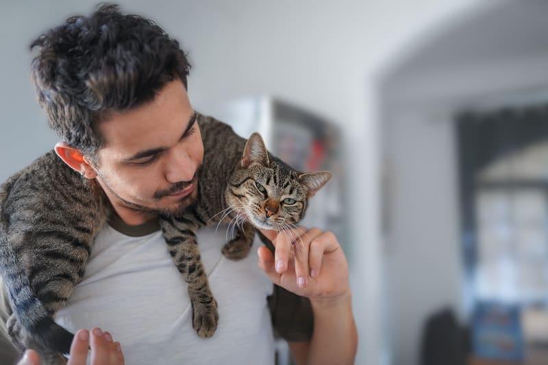 Защищают ли кошки своих хозяев