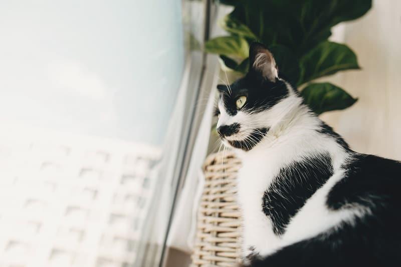 Жестоко ли держать кошку в одной комнате?