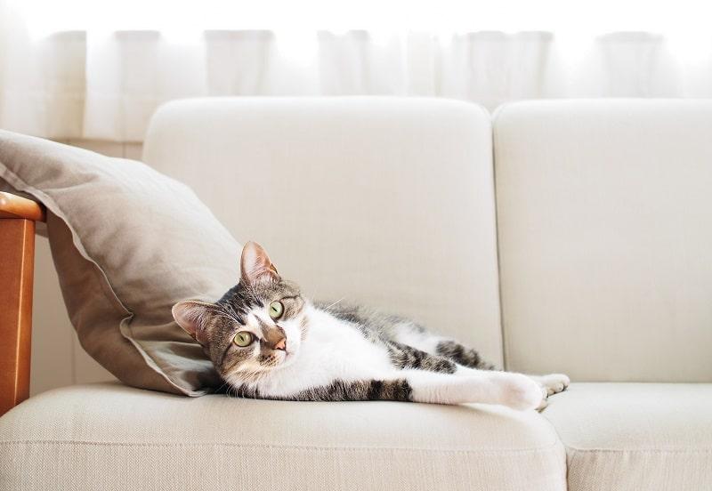 Жестоко ли держать кошку в помещении все время?