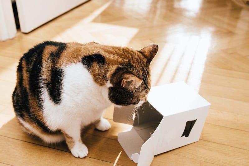 Жевательный картон для кошек