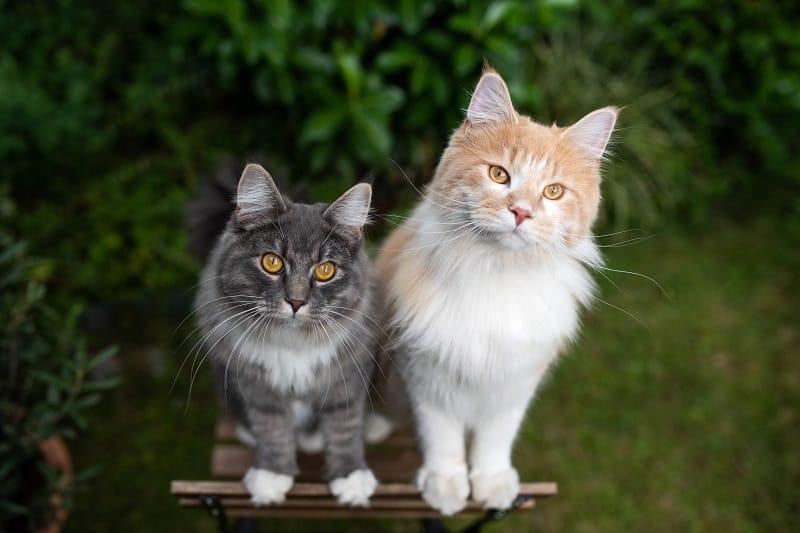 Звуки, заставляющие кошек уйти